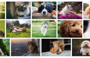 dogs-cats-fonds-ecran-chiens-et-chats-1